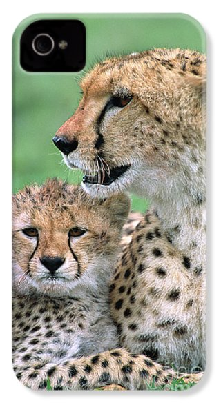 Cheetah Mother And Cub IPhone 4 Case by Yva Momatiuk John Eastcott