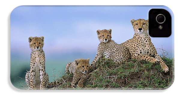 Cheetah Mother And Cubs Masai Mara IPhone 4 Case by Yva Momatiuk John Eastcott
