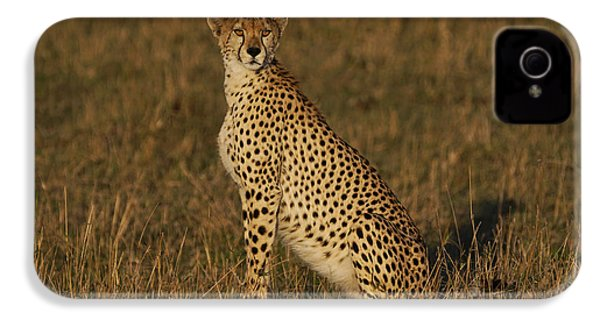 Cheetah On Savanna Masai Mara Kenya IPhone 4 / 4s Case by Hiroya Minakuchi