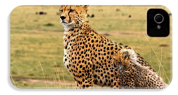 Cheetahs IPhone 4 Case by Babak Tafreshi