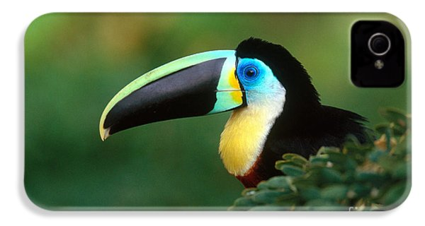 Citron-throated Toucan IPhone 4 / 4s Case by Art Wolfe