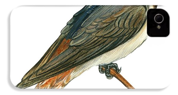 Cliff Swallow  IPhone 4 Case by Anonymous