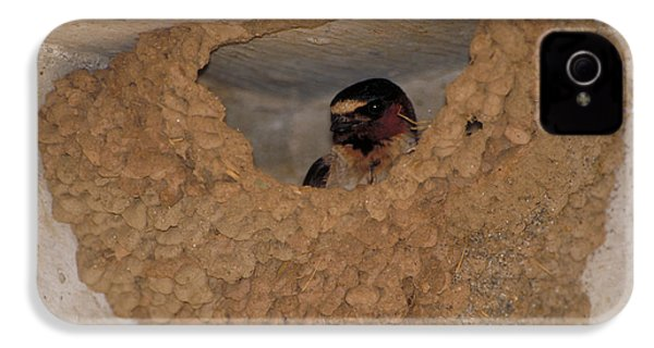 Cliff Swallows IPhone 4 Case by Paul J. Fusco