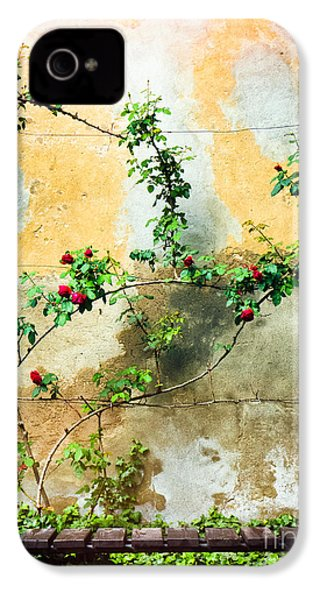 IPhone 4 Case featuring the photograph Climbing Rose Plant by Silvia Ganora