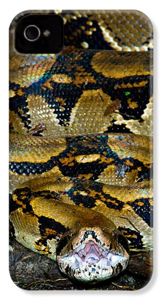 Close-up Of A Boa Constrictor, Arenal IPhone 4 / 4s Case by Panoramic Images