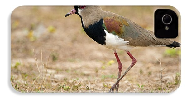 Close-up Of A Southern Lapwing Vanellus IPhone 4 Case by Panoramic Images