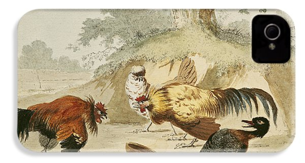 Cocks Fighting IPhone 4 / 4s Case by Melchior de Hondecoeter