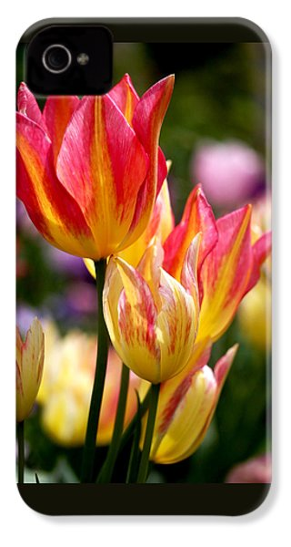 Colorful Tulips IPhone 4 / 4s Case by Rona Black