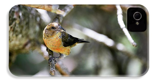 Common Crossbill Female IPhone 4 / 4s Case by Dr P. Marazzi