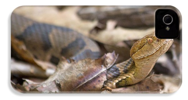 Copperhead In The Wild IPhone 4 / 4s Case by Betsy Knapp