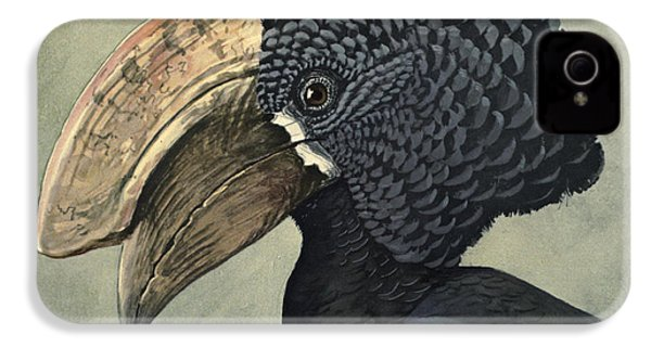 Crested Hornbill IPhone 4 Case by Rob Dreyer