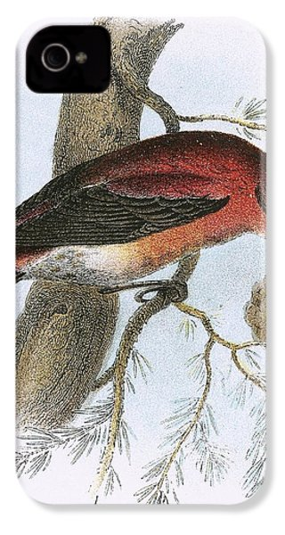Crossbill IPhone 4 Case