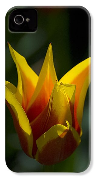 IPhone 4 Case featuring the photograph Crown Tulip by Yulia Kazansky