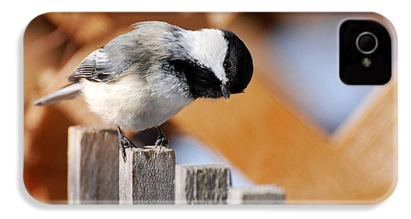 Curious Chickadee IPhone 4 / 4s Case by Christina Rollo