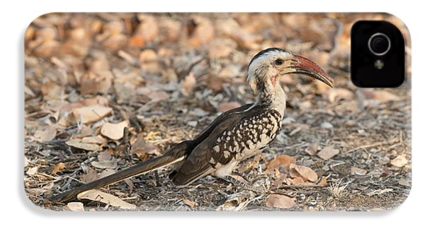 Damara Red-billed Hornbill Foraging IPhone 4 Case by Tony Camacho