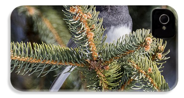 Dark-eyed Junco  IPhone 4 Case by Ricky L Jones