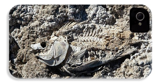 Dead Fish On Salt Flat IPhone 4 / 4s Case by Jim West
