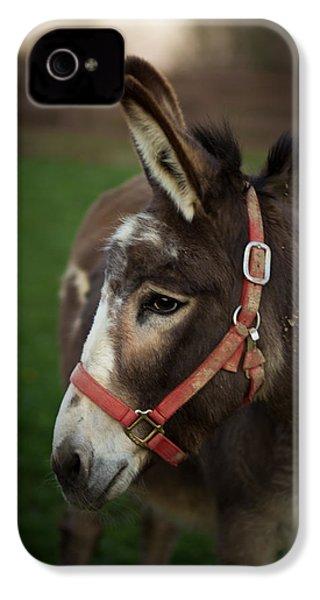 Donkey IPhone 4 Case by Shane Holsclaw