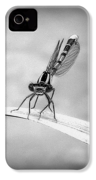 IPhone 4 Case featuring the photograph Donna The Damselfly by Karen Shackles