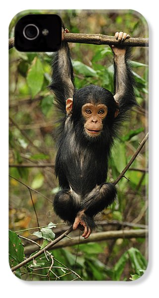 Eastern Chimpanzee Baby Hanging IPhone 4 / 4s Case by Thomas Marent
