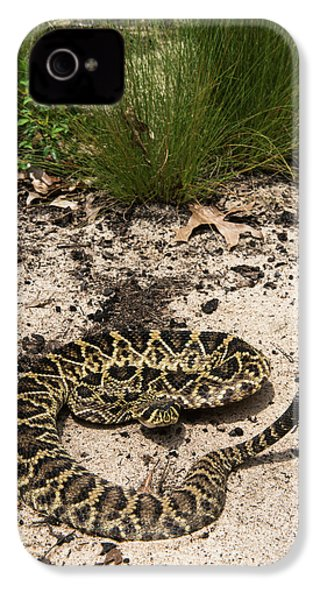 Eastern Diamondback Rattlesnake IPhone 4 Case by Pete Oxford