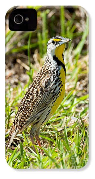 Eastern Meadowlark IPhone 4 Case by Anthony Mercieca