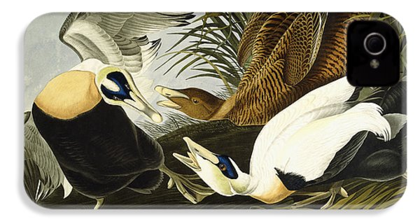 Eider Ducks IPhone 4 Case by John James Audubon