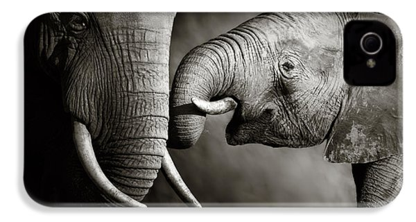Elephant Affection IPhone 4 Case by Johan Swanepoel