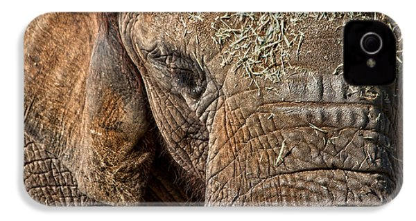Elephant Never Forgets IPhone 4 Case by Miroslava Jurcik