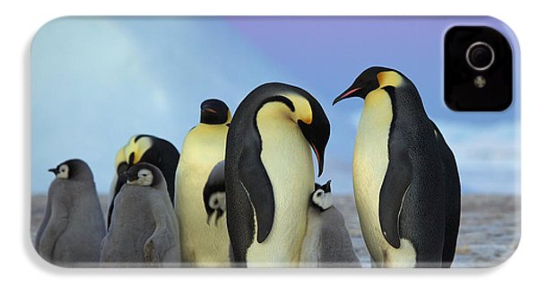 Emperor Penguin Parents And Chick IPhone 4 Case by Frederique Olivier