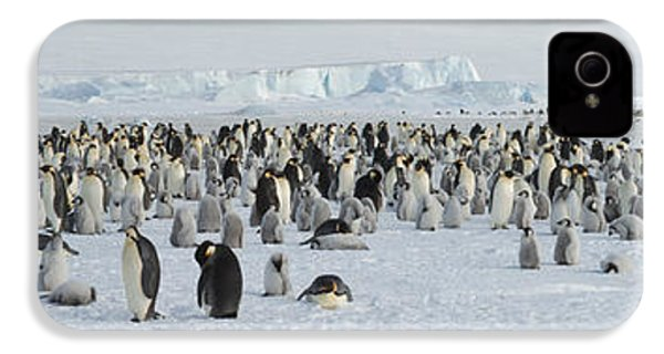 Emperor Penguins Aptenodytes Forsteri IPhone 4 Case by Panoramic Images