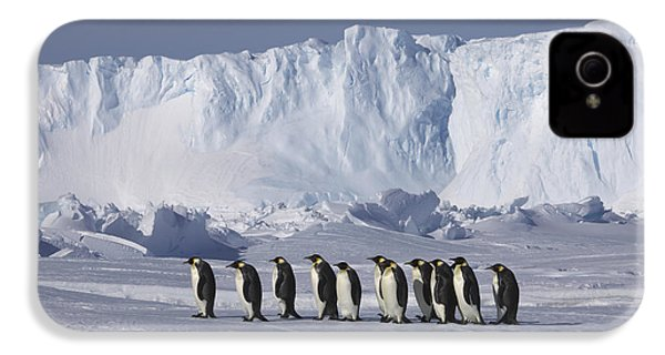 Emperor Penguins Walking Antarctica IPhone 4 Case by Frederique Olivier