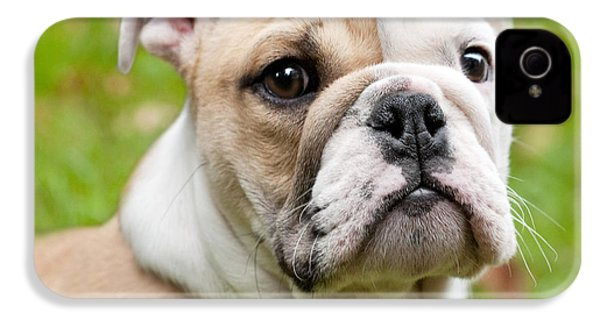 English Bulldog Puppy IPhone 4 Case by Natalie Kinnear