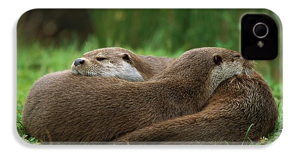 European River Otter Lutra Lutra IPhone 4 Case by Ingo Arndt