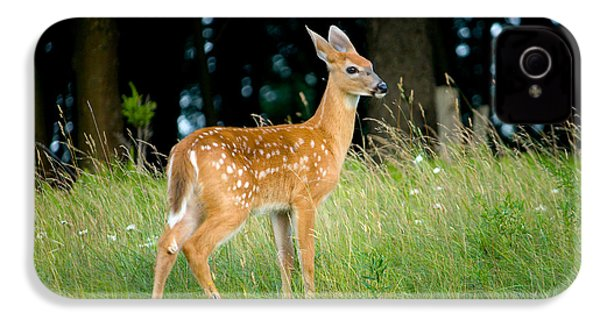 Fawn IPhone 4 Case by Shane Holsclaw