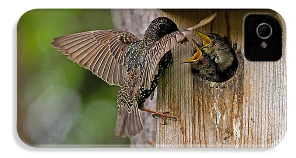 Feeding Starlings IPhone 4 Case by Torbjorn Swenelius