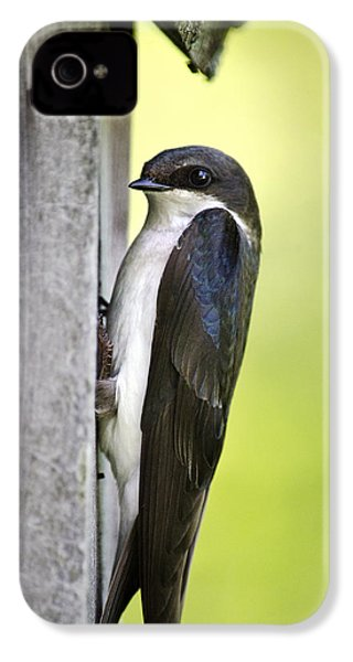 Tree Swallow On Nestbox IPhone 4 Case by Christina Rollo