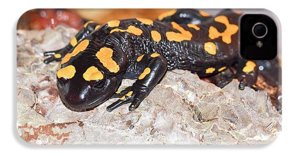 Fire Salamander (salamandra Salamandra) IPhone 4 Case by Photostock-israel