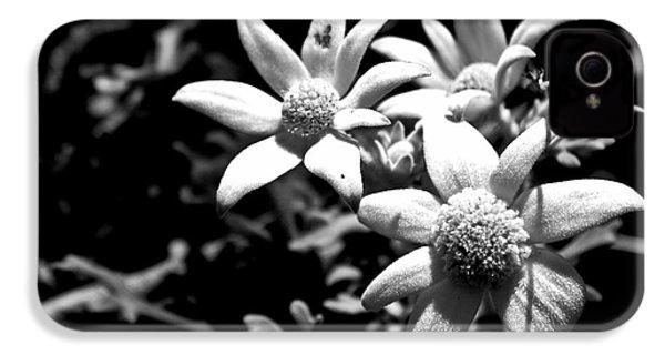 IPhone 4 Case featuring the photograph Flannel Flower by Miroslava Jurcik