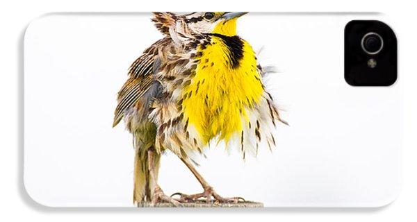 Flluffy Meadowlark IPhone 4 / 4s Case by Bill Swindaman
