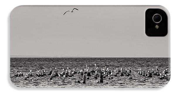 Flock Of Seagulls In Black And White IPhone 4 Case by Sebastian Musial