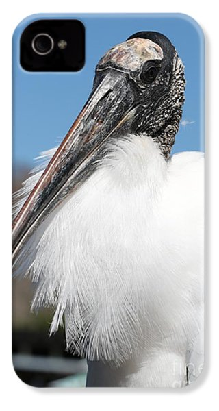 Fluffy Wood Stork IPhone 4 / 4s Case by Carol Groenen