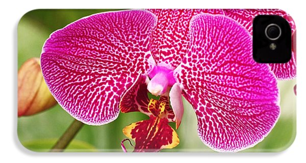 Fuchsia Moth Orchid IPhone 4 / 4s Case by Rona Black