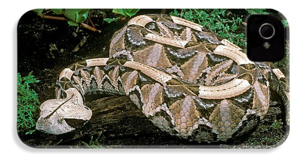 Gaboon Viper IPhone 4 Case
