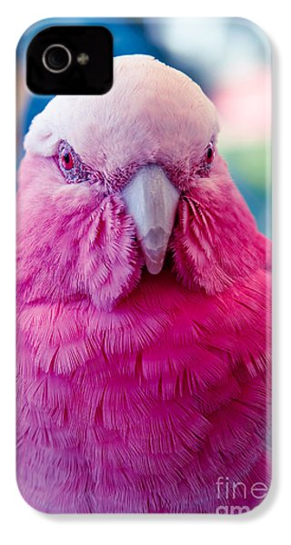 Galah - Eolophus Roseicapilla - Pink And Grey - Roseate Cockatoo Maui Hawaii IPhone 4 / 4s Case by Sharon Mau