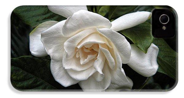 Gardenia IPhone 4 Case by Jessica Jenney