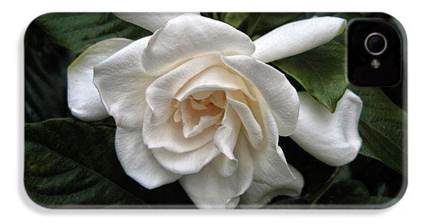 Gardenia IPhone 4 Case