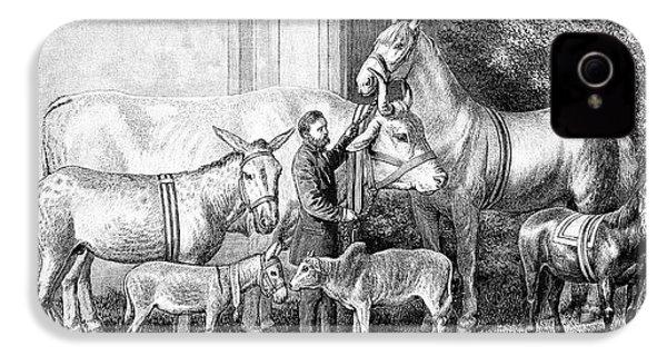 Gigantism And Dwarfism In Farm Animals IPhone 4 / 4s Case by Bildagentur-online/tschanz