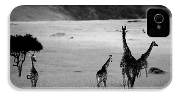 Giraffe In Black And White IPhone 4 Case