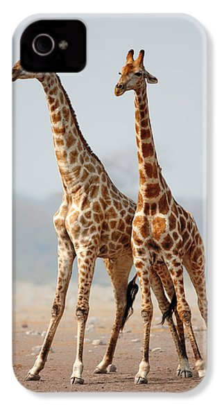 Giraffes Standing Together IPhone 4 / 4s Case by Johan Swanepoel